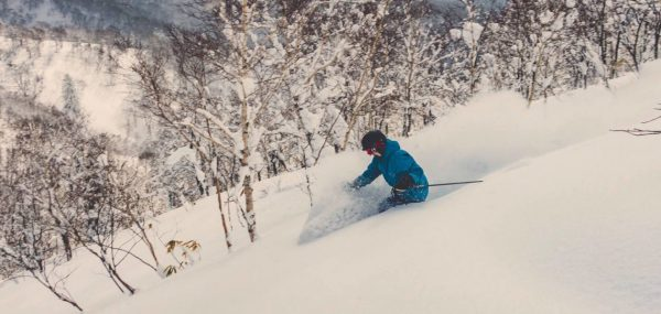 Woman skis down birch tree ski run in backcountry tour in japan