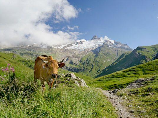 All Women's Switzerland Trek